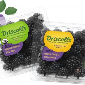 Fresh Blackberry Driscolls